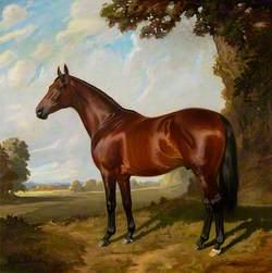 'Gainsborough'
