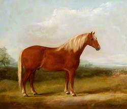 Fairhead Boxer 405