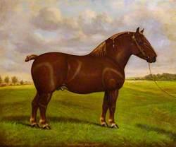 Sudbourne Bellman