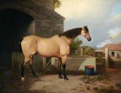 Horse in a Stable Yard