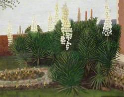 Yuccas at Cockmill Farmhouse, Pilton