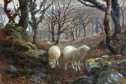 Sheep on a Wooded Hillside
