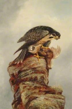 Birds of Prey, Falcon and Dead Bird