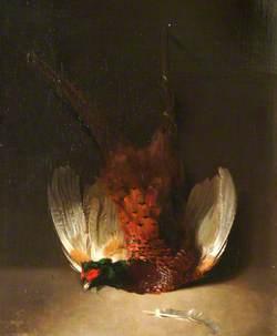 Dead Cock Pheasant