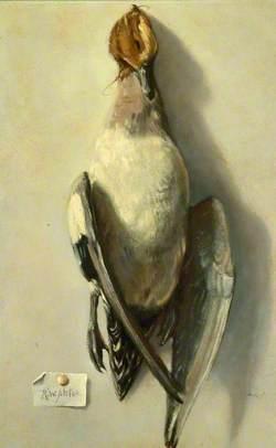 Dead Bird (Sheldrake)