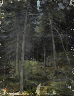 Pine Forest View