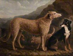 Four Dogs; a Collie from Tweedale, a Scots Deerhound, an Otter Terrier and a Scots Terrier
