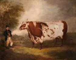 The Dunearn Ox