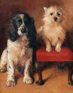 Spaniel and Terrier