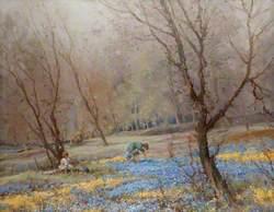 Bluebell Woods, Crookston