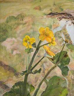 Kingcups, Souvenir of Glen Artney