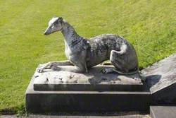 Greyhound*