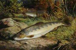 Fish on a Grassy Riverbank