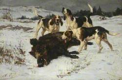 Hounds with a Boar