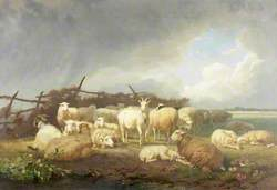 Sheep and Goats Sheltering