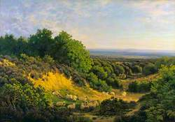 The Evening Sun: View on Ewhurst Hill, near Guildford