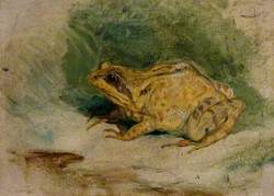 Study of a Frog