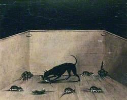 Champion Rat Catcher