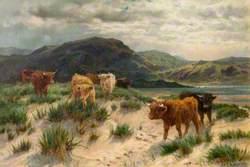 Cattle on the Ayrshire Coast