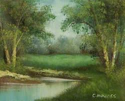 Silver Birch on a River Bank