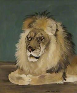 'Rota' the Lion
