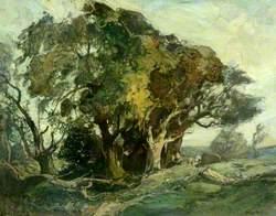 Beech Trees, Bardsea Forest
