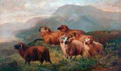 Rocky Landscape with Sheep