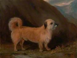 A Dandie Dinmont Terrier