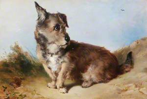 A Terrier Dog