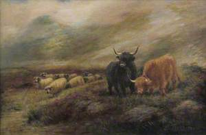 Highland Cows and Sheep