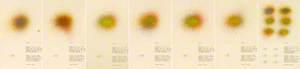 Small Spray Studies 1–7