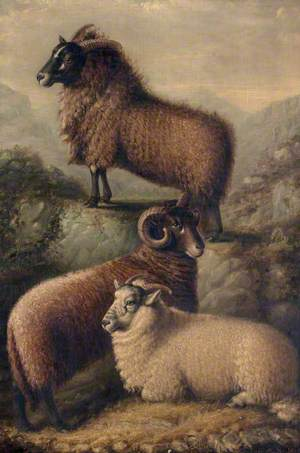 Three Welsh Sheep