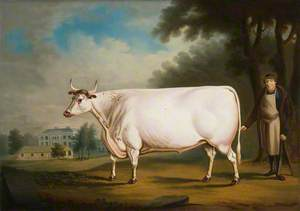 The White Ox of Nannau