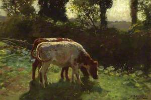 Two Calves grazing by a Hedge