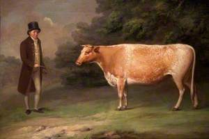 A Shorthorn Cow with a Figure