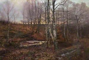 Last of the Evening Light (Birch Wood at Nightfall)