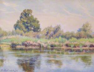 Reeds and Rushes at Tilehurst, Reading, Berkshire