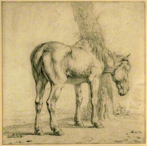 An Old Horse
