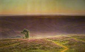 Heather in Bloom, Morning