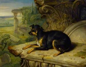 'Fanny', a Favourite Dog