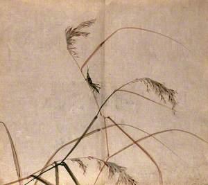 A Grasshopper on a Grass Plant Stem