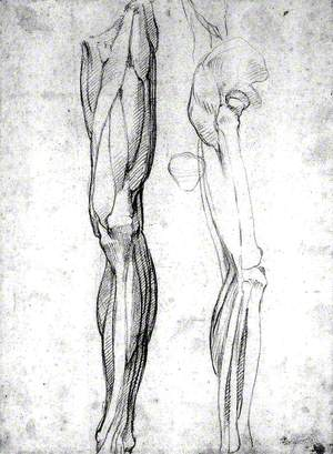The Muscles of the Left Leg, Seen from the Front, and the Bones and Muscles of the Right Leg Seen in Right Profile, and between Them, a Patella