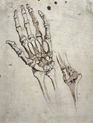 Bones of the Human Hand and Wrist, and of the Elbow Joint (recto); Head of a Man (verso)