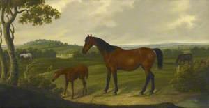 'Elizabeth' in a Landscape