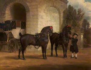 Two Black Coach Horses with a Coachman
