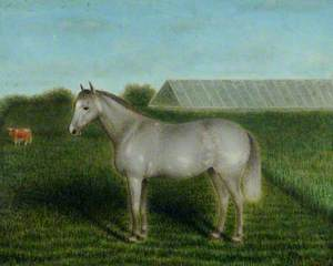 Grey Pony in front of a Vinery