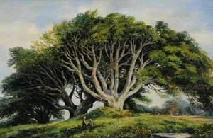 Beech Trees, Foulon Cemetery, Guernsey