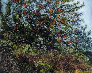 Apple Tree, Norfolk