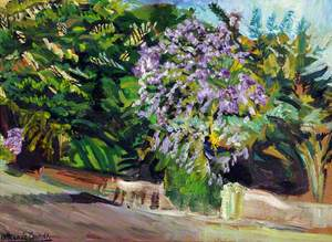 Bougainvillea Bush and Trees, Eastern Road, Nassau