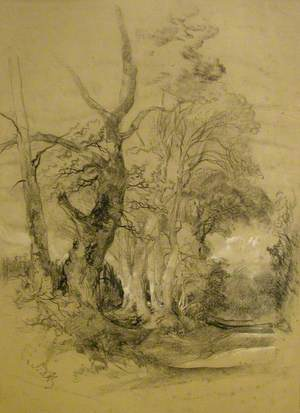 A Study of Trees